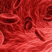 Blutgruppendiät: Ansatz und Prinzip